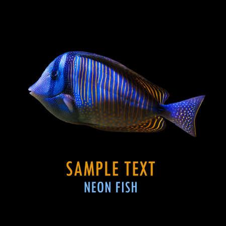 neon fish: Neon fish on black background