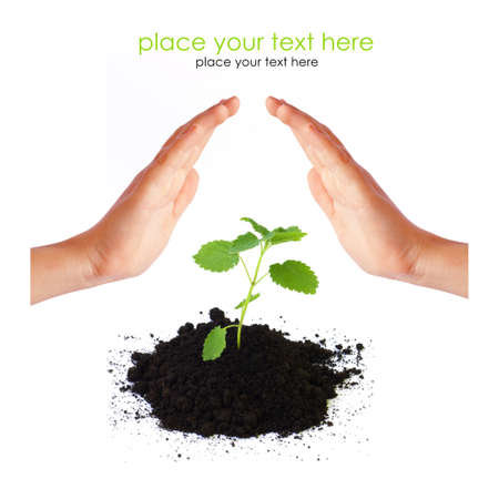 Young sprout, environmental protection concept Stock Photo - 18678022