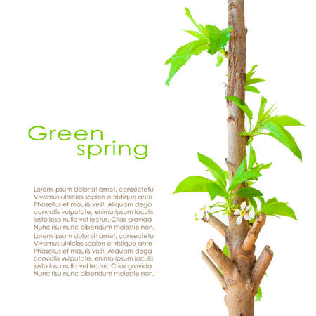 shoot: Spring card design with copyspace