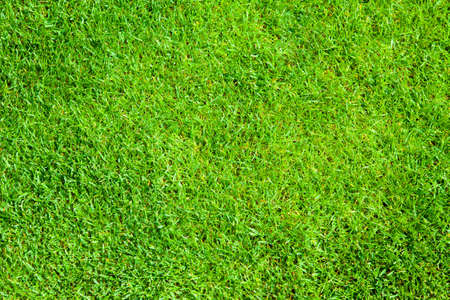 sod: Green grass, natural background