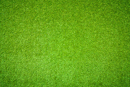 sod: Natural background of green grass