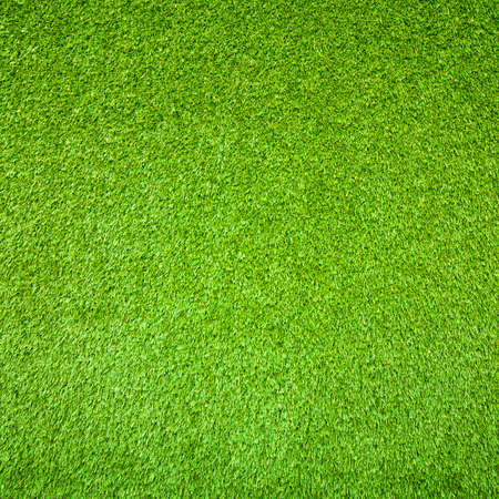 Green grass background Stock Photo - 22225535