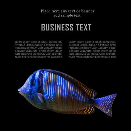 exotic fish: Carta di progettazione con pesci esotici Archivio Fotografico