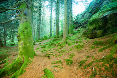 Mystical forest photo