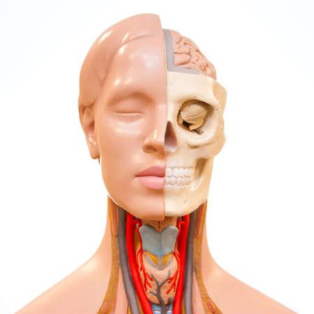 dummy: Medical rubber dummy