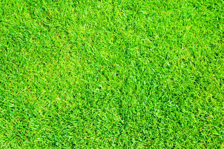 grassplot: Green grass natural background Stock Photo
