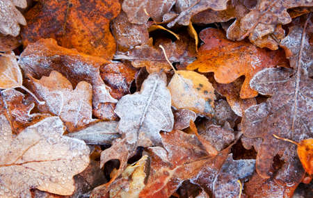 turf pile: Abstract autumn background, frozen leaves, small depth of field Stock Photo
