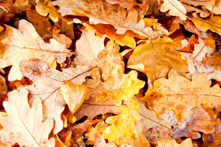 turf pile: Abstract autumn background with yellow leaves, small depth of field