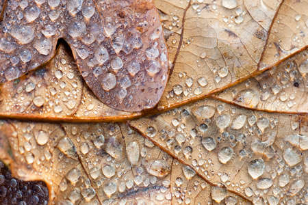 nature photo: Macro autumn leaf, small depth of field Stock Photo