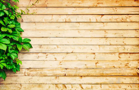 Light wood background Stockfoto