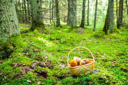Mushrooms basket in a deep forest