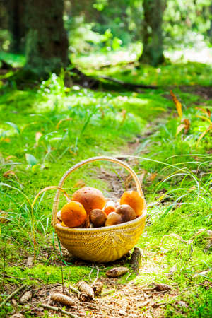 Sunny forest and basket mushrooms
