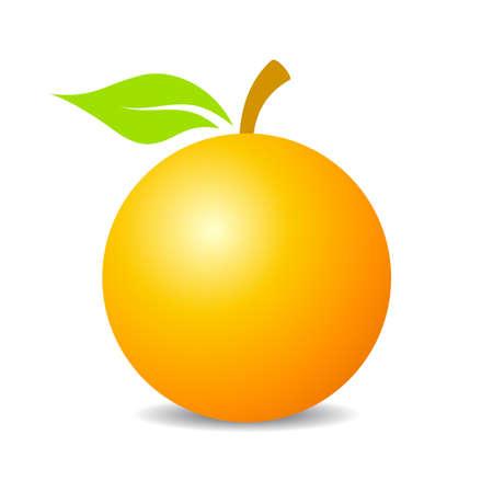 citrus tree: Orange fruit vector icon Illustration