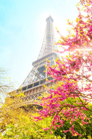 Eiffel Tower and cherry blossom, spring romantic postcard Stock Photo
