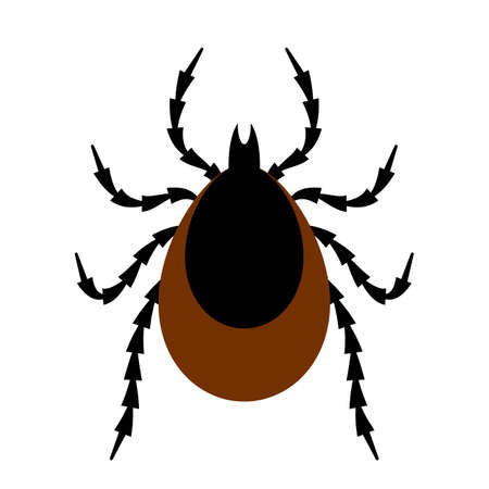 illustration infected: Tick insect vector illustration