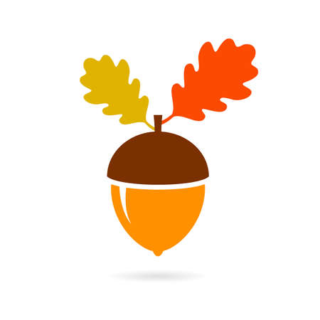Acorn autumn vector icon