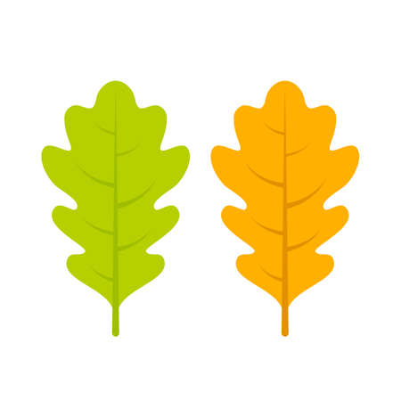 Yellow and green oak leaf vector icon
