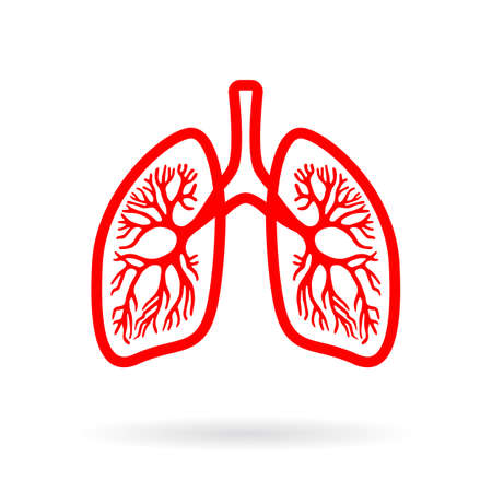 Human lungs outline icon