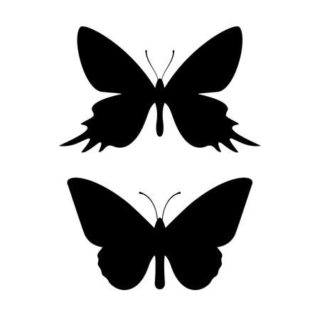 Butterfly black silhouette Illustration