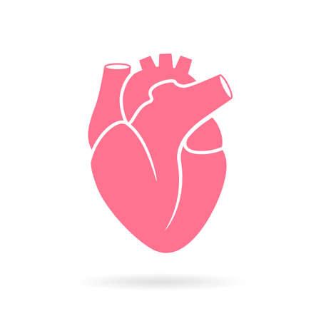 Heart anatomy vector illustration Иллюстрация