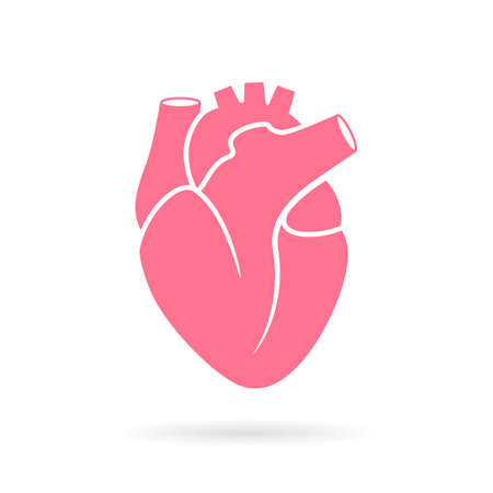 Heart anatomy vector illustration Illustration