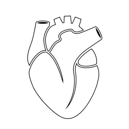 Outline icon of human heart anatomy Illustration