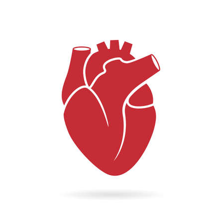 Realistic human heart vector drawing Stock Illustratie