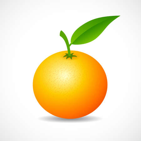 mandarina del icono del vector