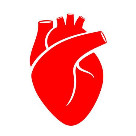 Ilustración médica del corazón humano rojo