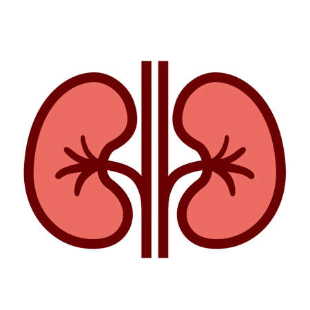 Kidneys vector cartoon