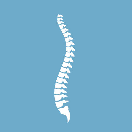 Strong healthy spinal cord vector icon Ilustrace