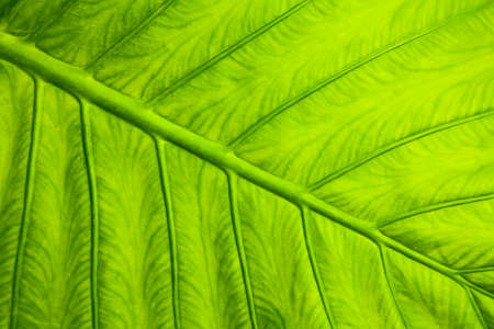 Green leaf macro texture