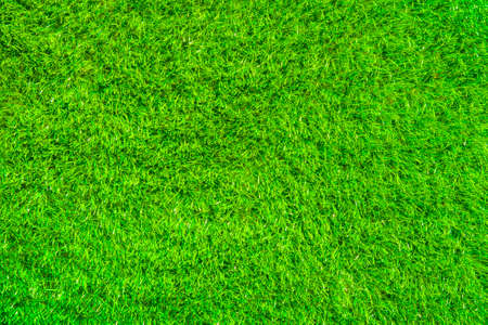 Green grass field natural background Stock Photo