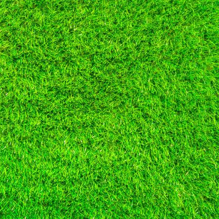 Green fresh grass texture