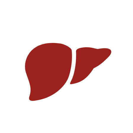 Healthy human liver vector icon isolated on white background