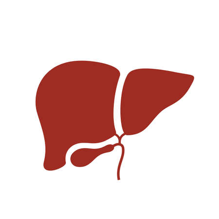 Liver silhouette vector icon isolated on white background