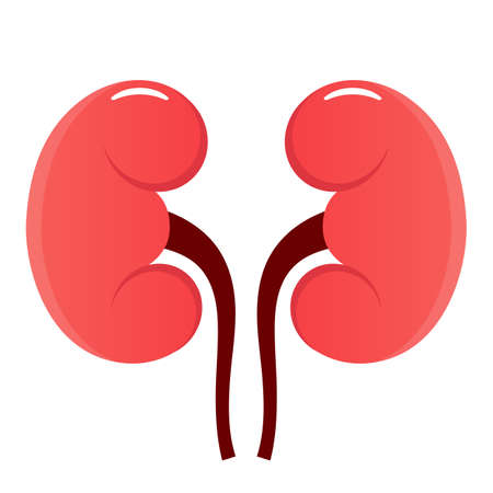 Kidney vector icon isolated on white background
