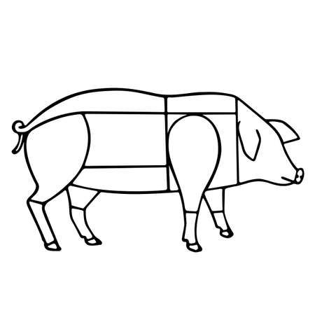 Pig meat scheme, vector illustration isolated on white background