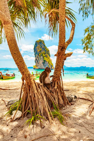 Tropical beach landscape with monkey in Krabi province, Thailand