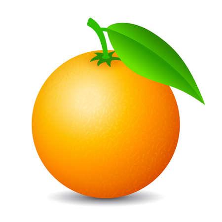 Orange fruit vector cartoon isolated on white background