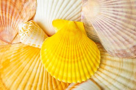 Sea shells texture, natural background