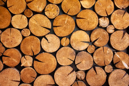 Natural background of wood logs, cut tree texture