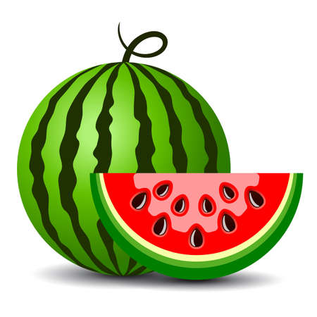 Water melon cartoon, vector clip art on white background