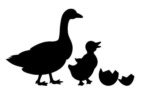 Newborn duckling and duck vector icon isolated on white background