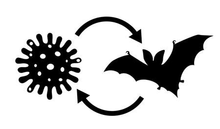 Coronavirus came from bats vector illustration on white background