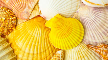 Wide panorama of sea shells, abstract natural texture