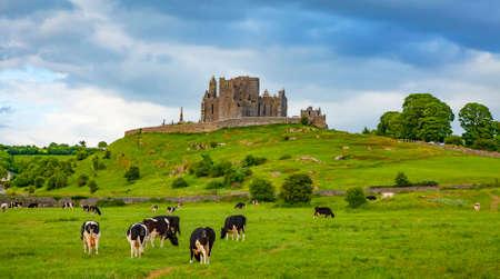 Idyllic Irish landscape, Rock of Cashel castle on background, Tipperary county, Ireland 스톡 콘텐츠