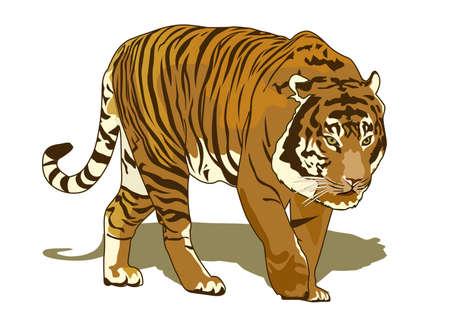 sumatran tiger: kings forest