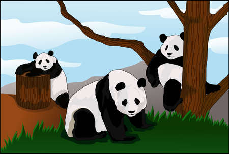 state of the panda enclosure d afternoon Illustration