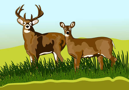a pair of deer forest Stock Vector - 10298062